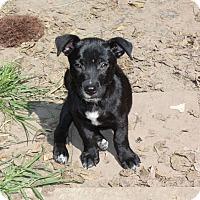 Adopt A Pet :: Buddy-PENDING - Marion, AR
