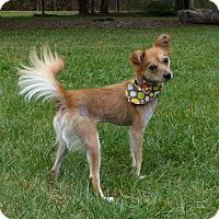 Adopt A Pet :: Lucy - Mocksville, NC