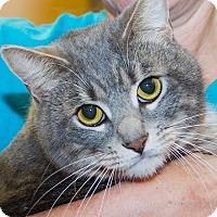 Adopt A Pet :: Brady - Irvine, CA