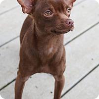 Adopt A Pet :: Aero - Surrey, BC