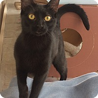 Adopt A Pet :: Yen - St. Louis, MO