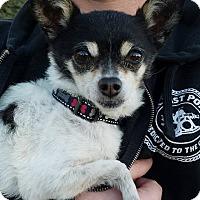 Adopt A Pet :: Goober - San Diego, CA