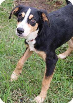 Collie Mix Dog for adoption in Austin, Texas - Rita