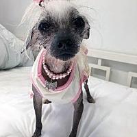 Adopt A Pet :: Helen Roper (NY) - Gilford, NH