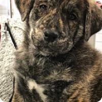 Adopt A Pet :: Darling - Mission Viejo, CA