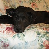 Adopt A Pet :: Mikey - Melbourne, AR