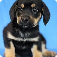 Adopt A Pet :: Minnesota - Waldorf, MD