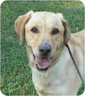 Labradoodle Dog for adoption in Salem, Massachusetts - Winston