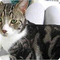 Adopt A Pet :: Benji - New York, NY