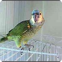 Adopt A Pet :: Casey - Salt Lake City, UT
