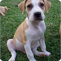 Adopt A Pet :: Noah - ARDEN, NC