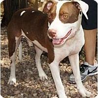 Adopt A Pet :: Saturn - Gilbert, AZ