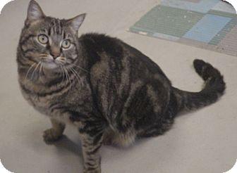 Domestic Mediumhair Cat for adoption in Quail Valley, California - Julie