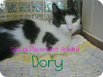 Domestic Shorthair Cat for adoption in Hamilton, Ontario - Dory