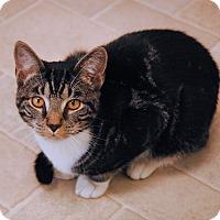 Adopt A Pet :: Prince - Winchendon, MA