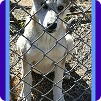 Catahoula Leopard Dog Mix Dog for adoption in Allentown, Pennsylvania - JASPER