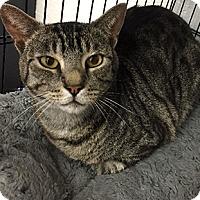 Adopt A Pet :: Tucker - Oakland, CA