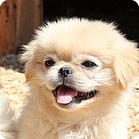 Adopt A Pet :: Punky - Foster, RI