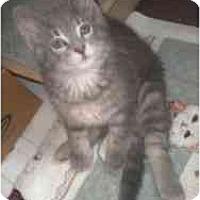 Adopt A Pet :: Cleveland - Milwaukee, WI