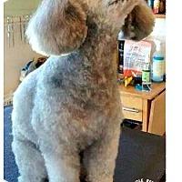 Adopt A Pet :: Pepper - Essex Junction, VT