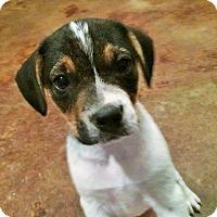Adopt A Pet :: Brother Bear - Bedminster, NJ