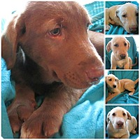 Adopt A Pet :: Outsiders Litter - Poughkeepsie, NY