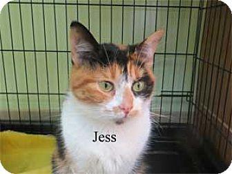 Domestic Shorthair Cat for adoption in Warren, Pennsylvania - Jess