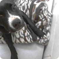 Adopt A Pet :: DESTINY - Conroe, TX