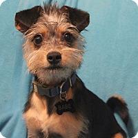 Adopt A Pet :: Wesley - San Francisco, CA