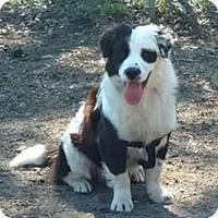 Adopt A Pet :: Charlie - Westport, CT