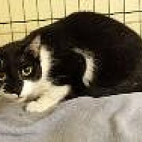 Adopt A Pet :: JEREMY - Pt. Richmond, CA