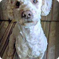 Adopt A Pet :: Pete - Tijeras, NM