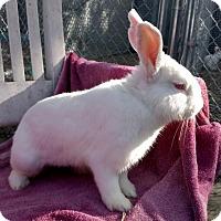 Adopt A Pet :: Thumpboy - Oakland, CA