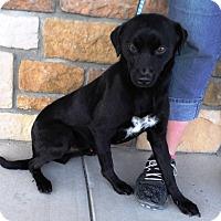 Adopt A Pet :: Diesel - Artesia, NM
