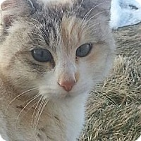 Adopt A Pet :: Feral Cats - Ogden, UT