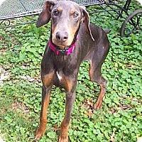 Adopt A Pet :: Clara--adopted!! - New Richmond, OH