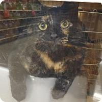 Adopt A Pet :: LUCKY - Diamond Bar, CA