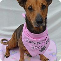 Adopt A Pet :: Kenzie - Aurora, CO