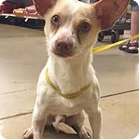 Adopt A Pet :: Dash - Gainesville, FL