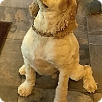 Adopt A Pet :: Cooper-Adoption Pending - Sacramento, CA