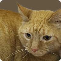 Adopt A Pet :: Lila - Rochester, NY