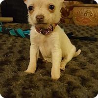 Adopt A Pet :: Tiki - San Diego, CA