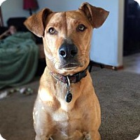 Adopt A Pet :: Opie - Wichita, KS