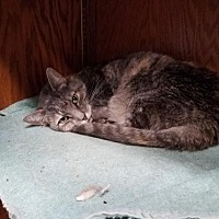 Adopt A Pet :: Misty Mae - Colfax, IL