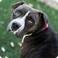 Adopt A Pet :: Layla - Bradenton, FL