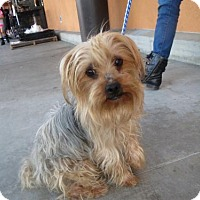 Adopt A Pet :: Angel #2 - Moreno Valley, CA