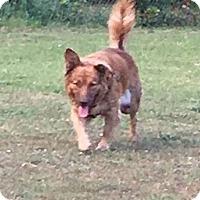 Adopt A Pet :: Mocha - GREENLAWN, NY