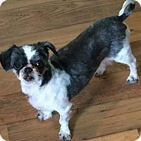 Adopt A Pet :: Lana - Homer Glen, IL