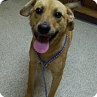 Adopt A Pet :: CLINE - Glastonbury, CT
