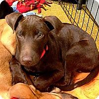 Adopt A Pet :: Buddy - Silsbee, TX